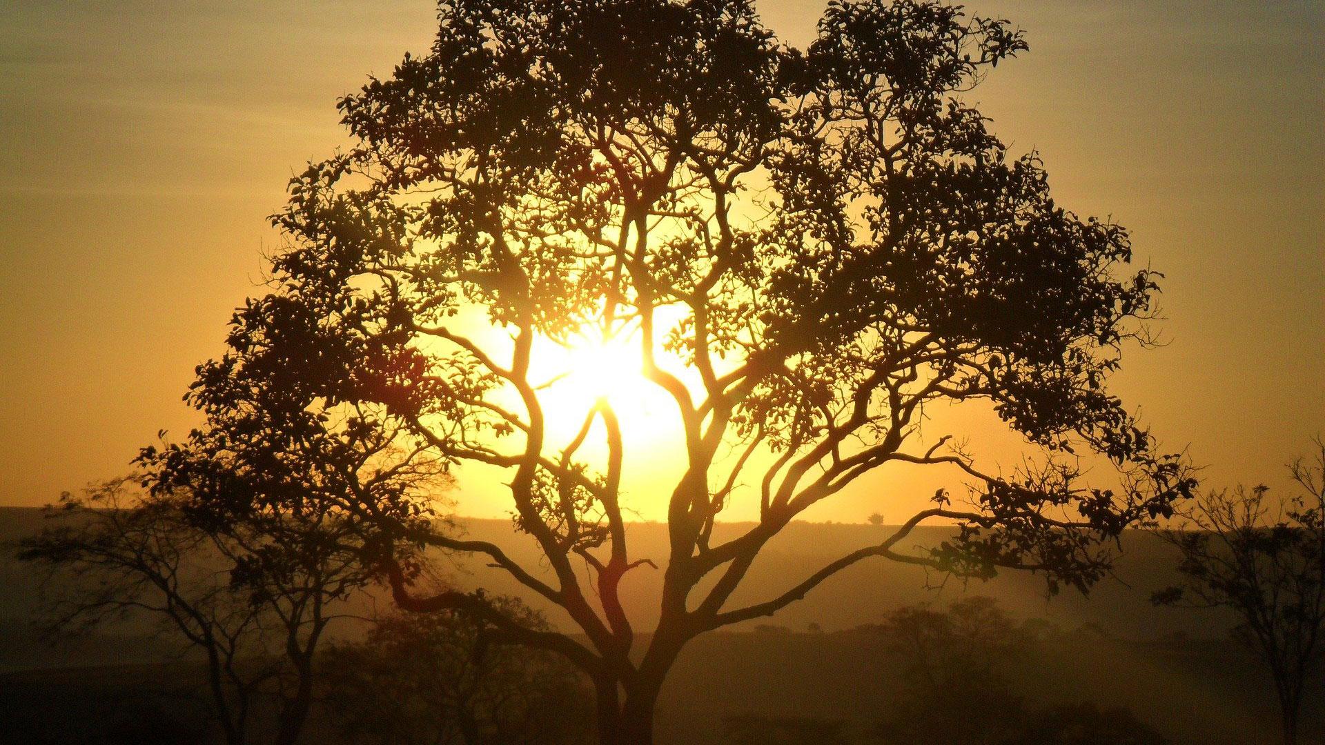 夕日と大木
